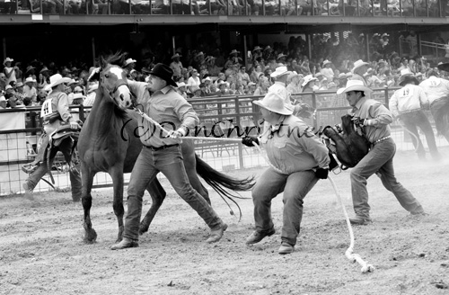 Cowboys try a hand in the wild horse race!